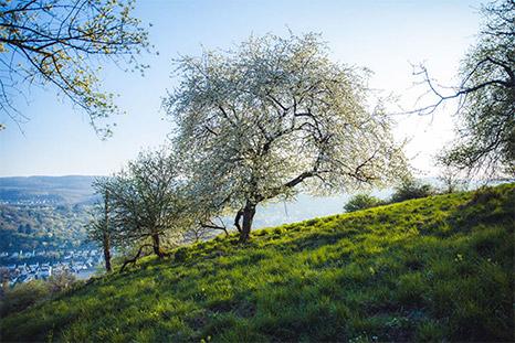 Rhine footpath: St.Goarshausen – Kestert
